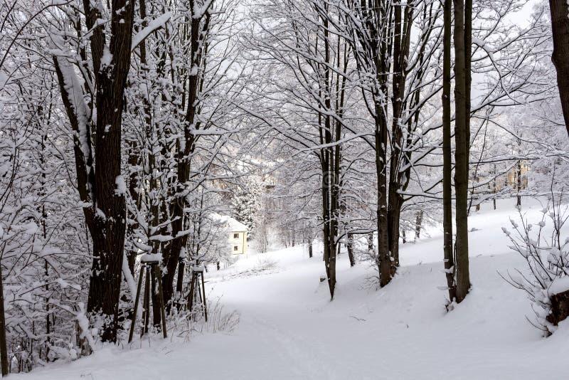Foto del paisaje nevoso cubierta con nieve y el camino en invierno fotografía de archivo