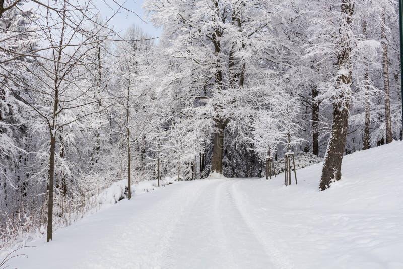 Foto del paisaje nevoso cubierta con nieve y el camino en invierno fotografía de archivo libre de regalías