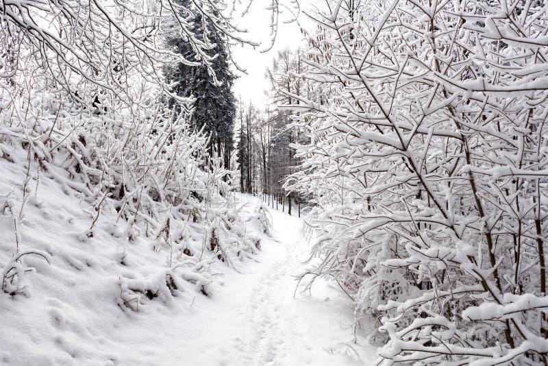 Foto del paisaje nevoso cubierta con nieve y el camino en invierno imagen de archivo libre de regalías