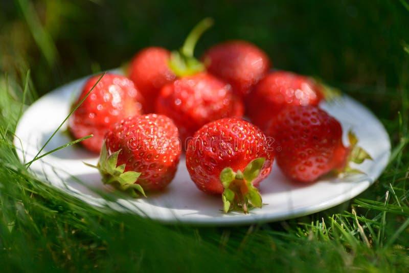 Foto del primer de fresas rojas en la placa blanca Foto adquirida 45 grados imagenes de archivo