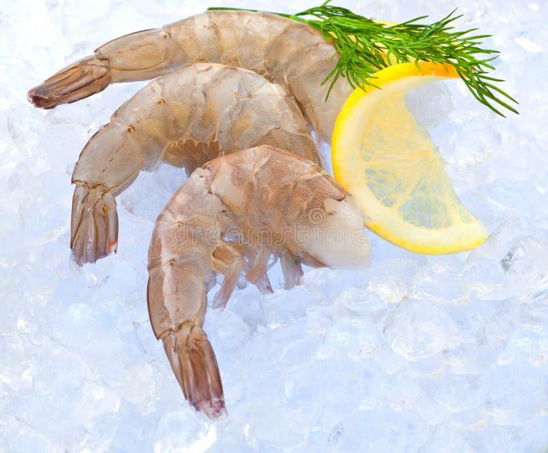 Foto del primer de gran tamaño del camarón crudo congelado con la cola quitada fotos de archivo libres de regalías