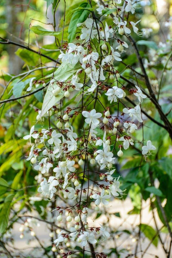 Foto del primer de la flor hermosa fotos de archivo