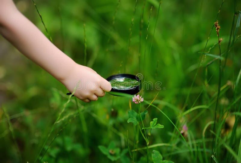 Foto del primer de la naturaleza de exploración del niño con la lupa imagenes de archivo