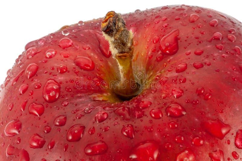 Foto del primo piano della mela rossa con le gocce di acqua isolate su fondo bianco fotografia stock libera da diritti