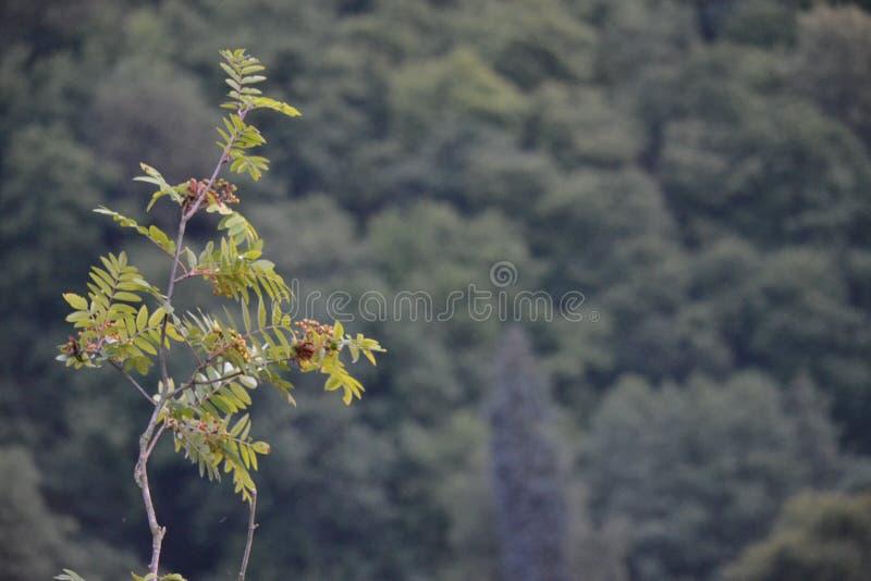 Foto del ramoscello su una montagna fotografie stock