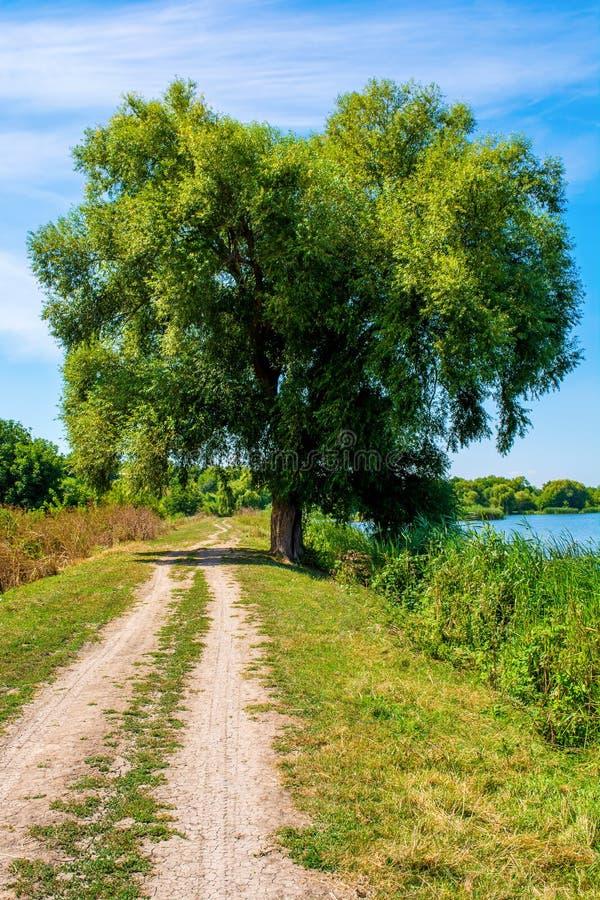 Foto del sauce cerca del lago azul hermoso con el camino imagenes de archivo