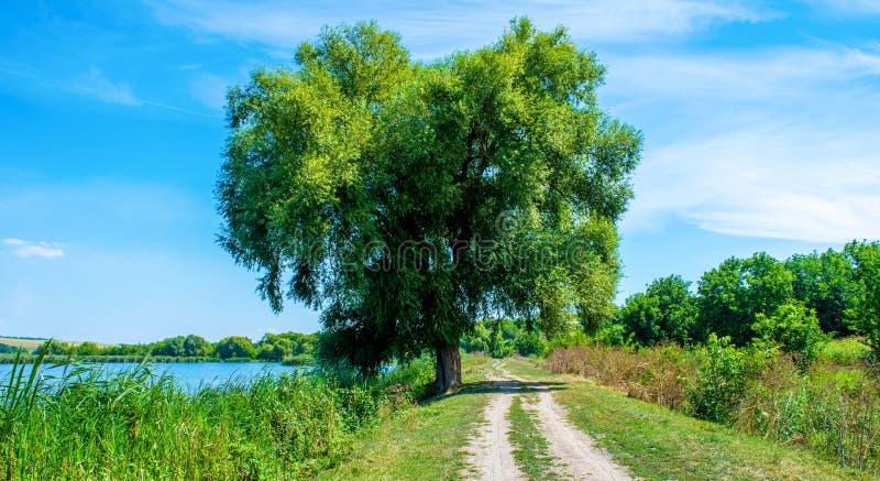Foto del sauce cerca del lago azul hermoso con el camino fotografía de archivo libre de regalías