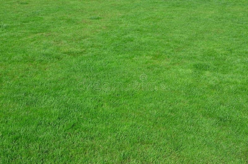 Foto del sitio con la hierba verde uniforme-cosechada Césped o callejón de gras verdes frescos foto de archivo libre de regalías