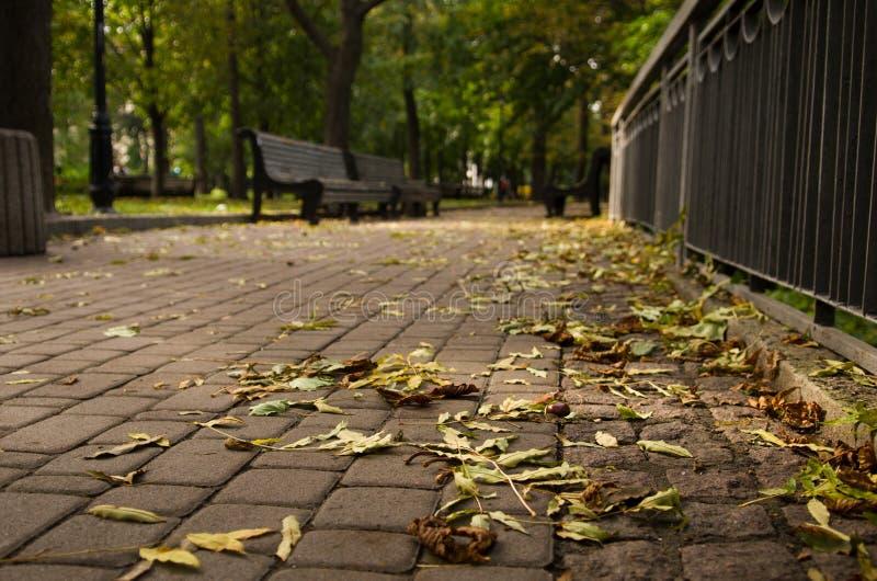 Foto del vicolo del posto calmo nel parco di autunno a Kiev Rilassi l'umore, il silenzio, nessuna gente intorno, soltanto foglie  fotografie stock libere da diritti