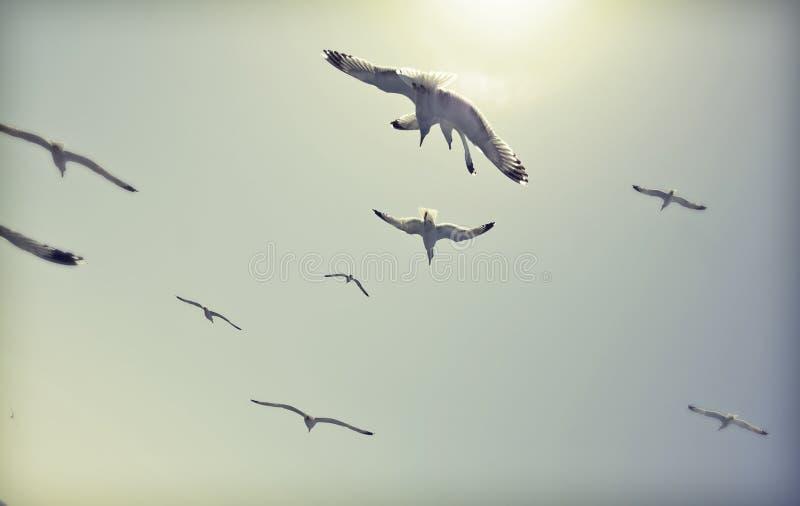 Foto del vintage de las gaviotas del vuelo foto de archivo libre de regalías