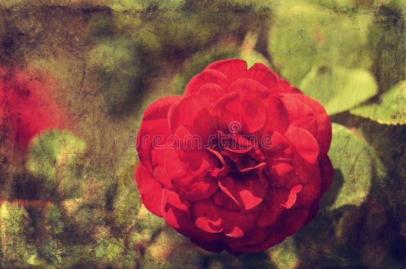 Foto del vintage de una flor de la rosa imagen de archivo libre de regalías