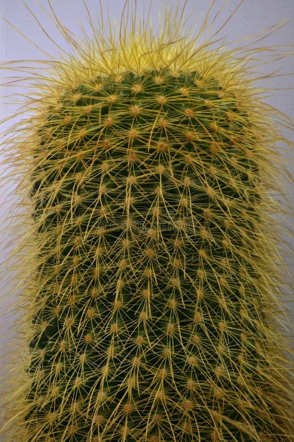foto della pianta nel macro formato immagini stock libere da diritti