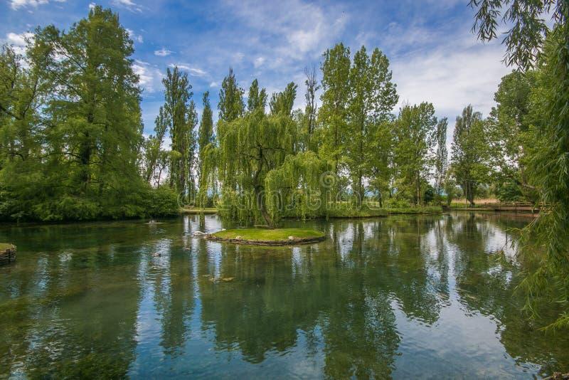 Foto della riflessione del salice piangente nel Fonti del Clitunno, Umbria fotografia stock libera da diritti