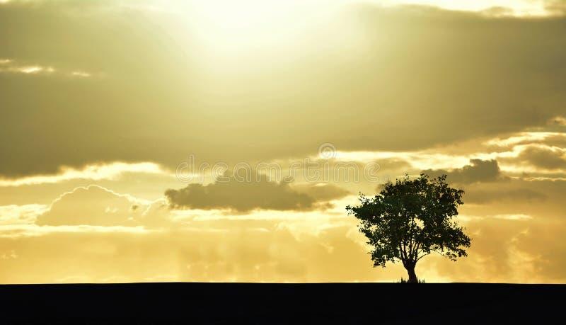 Foto della siluetta dell'albero, campagna immagini stock