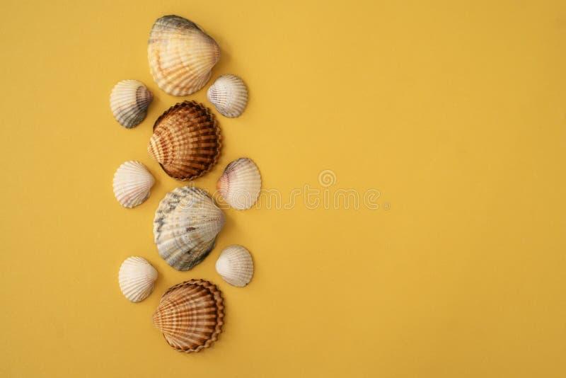 Foto delle conchiglie Fondo giallo Concetto di estate fotografie stock