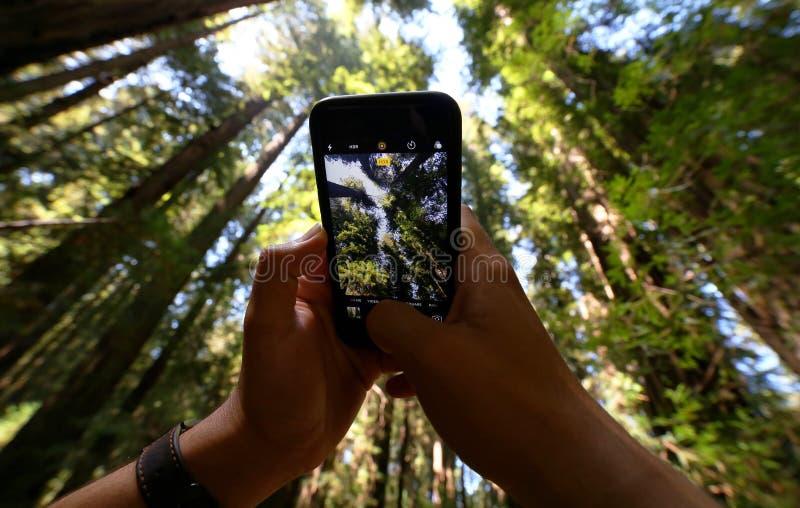 Foto der Bäume stockfoto