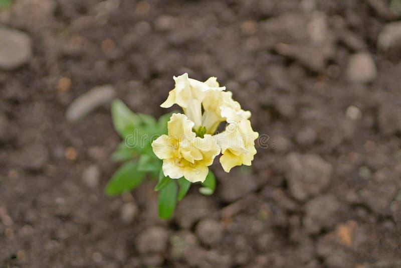 Foto der gelben Blume auf der Gartenpflanze stockfotos