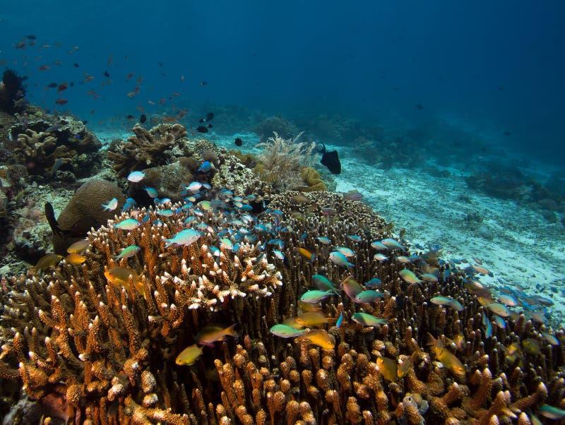 Foto der korallenroten Kolonie stockfotografie