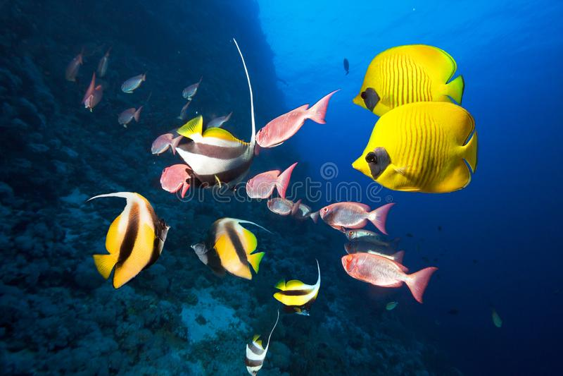 Foto der korallenroten Kolonie stockbild