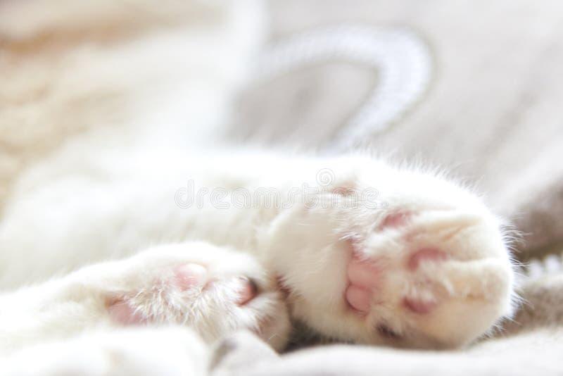 Foto der Tatzen der netten rosa Katze, selektiver Fokus stockbilder