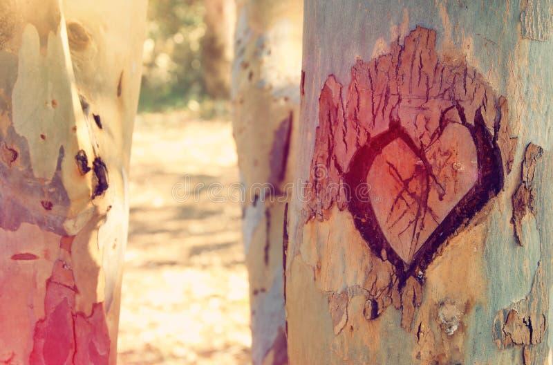 Foto des alten Baumstammes mit Herzen schnitzte auf ihm Valentine& x27; s-Tageskonzept romantischer Hintergrund stockbilder