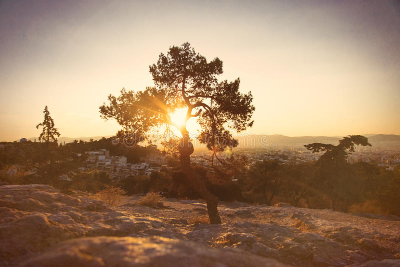 Foto des Baums stockfotos