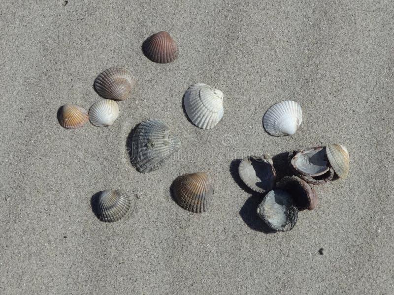 Foto des Molluskenoberteils auf einer sandigen Seeküste lizenzfreie stockfotos