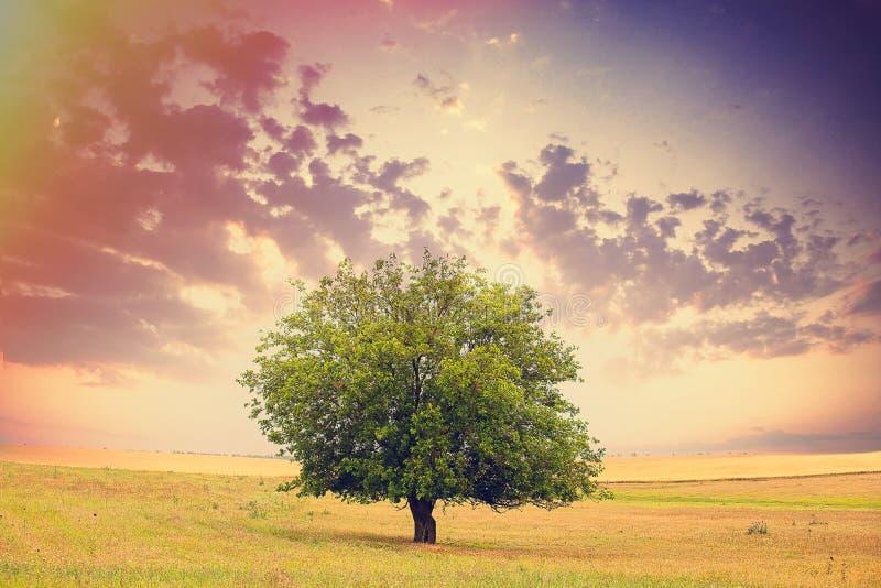 Foto des schönen Baums auf dem wunderbaren Feld und Himmel backgroun stockbilder