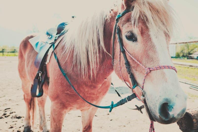 A foto descreve o cavalo marrom e branco bonito bonito que olha na foto de stock