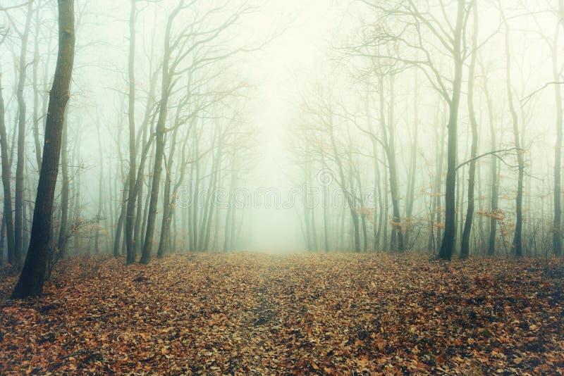 Foto di Artisctic di una foresta nuda in nebbia misteriosa fotografia stock