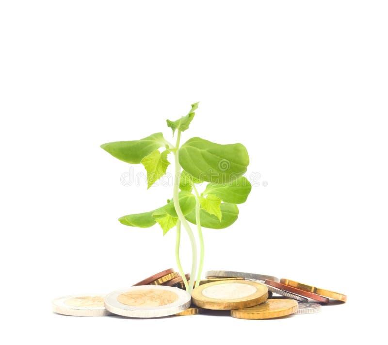 Foto di concetto di finanza di affari Concetto ebreo di carità Tzedakah, tradotto come carità Una foto di soldi, mucchio di euro  fotografia stock libera da diritti