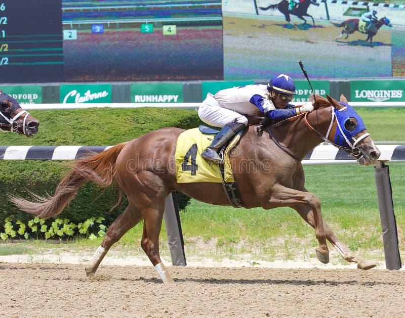 Foto di conquista di corsa di cavalli da Belmont fotografie stock libere da diritti