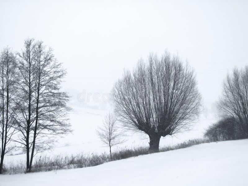 Foto di contrapposizione degli alberi glassati sul pendio di collina mentre nevicando fotografia stock