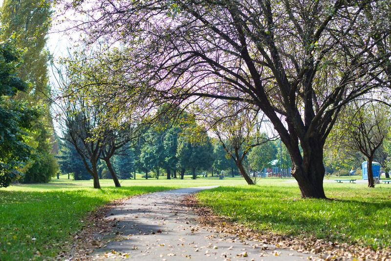 Foto di Footpath in park immagini stock