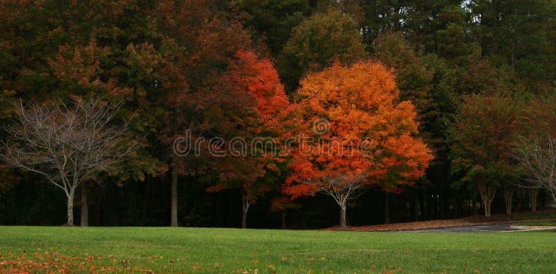 Foto di panorama degli alberi in autunno fotografie stock libere da diritti