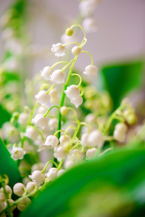 Foto di piccolo mughetto del fiore bianco immagini stock