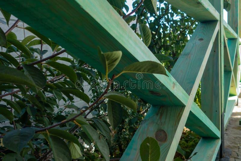 Foto di riserva - di legno recinti l'erba Recinto di legno dei bordi verdi immagine stock libera da diritti
