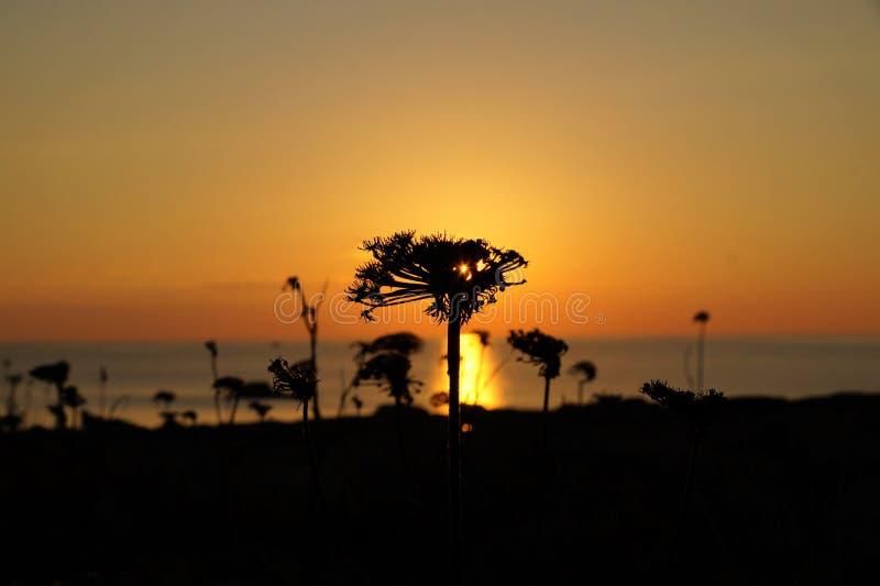Foto di tramonto presa attraverso la pianta selvatica immagini stock libere da diritti