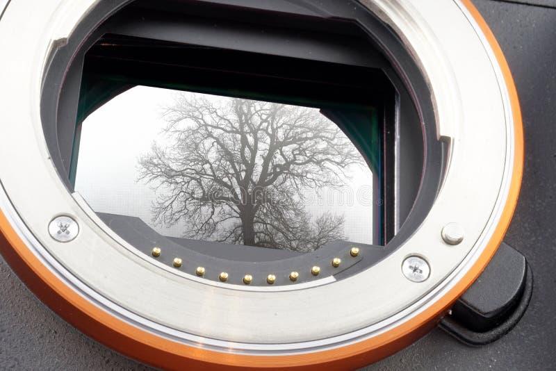 Foto di un albero senza foglie dietro foschia nebbiosa sul sensore esposto di una macchina fotografica mirrorless della interamen fotografia stock