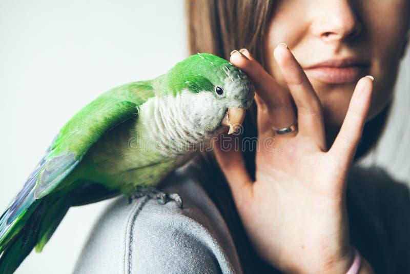 Foto di un pappagallo verde di Quaker che si siede sulla mano del ` s della donna fotografia stock