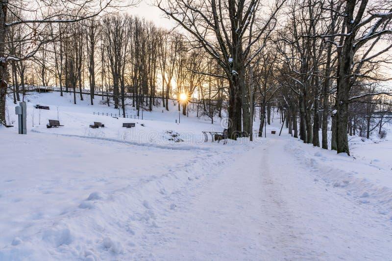 Foto di un passaggio pedonale vuoto in parco in vicolo su Sunny Winter Evening fotografia stock libera da diritti