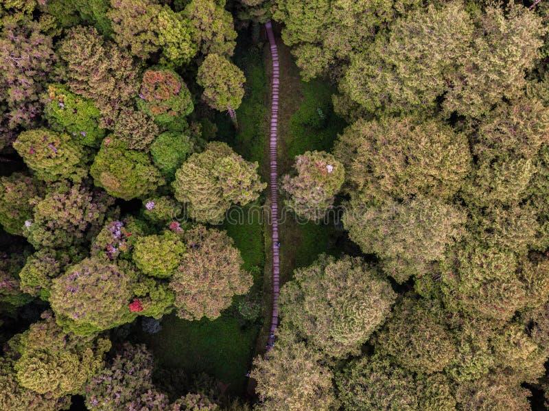 Foto di un percorso nella foresta da sopra fotografie stock libere da diritti