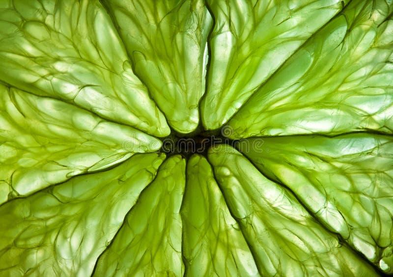 Foto di una fine dell'agrume in su. immagini stock