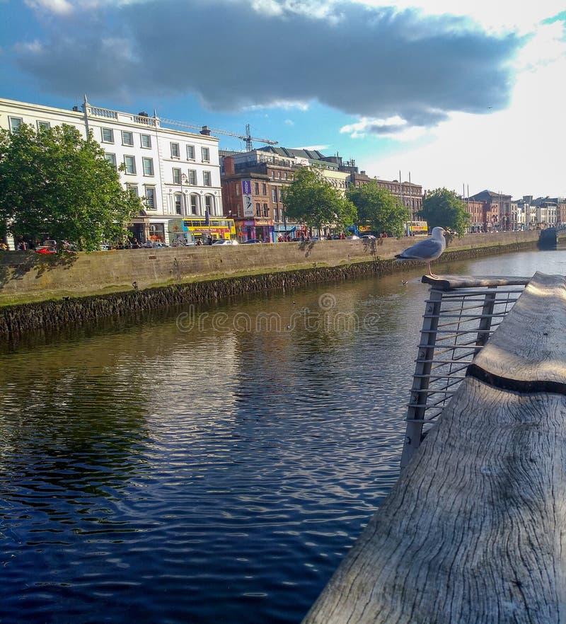 Foto di viaggio di Dublin Ireland Summer, gabbiano e fiume Liffey fotografia stock