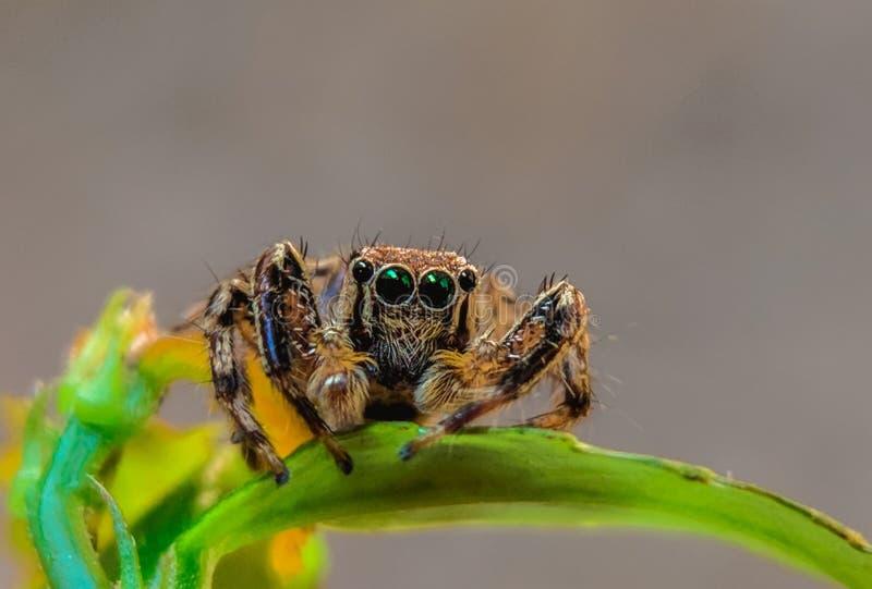 Foto di vita del ragno macro nel mio giardino immagini stock