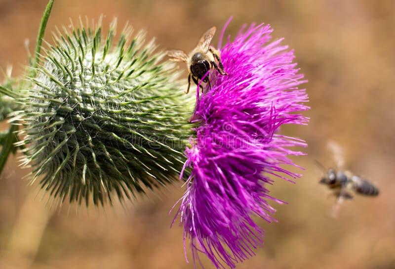 Foto dinamica con api e fiori immagine stock