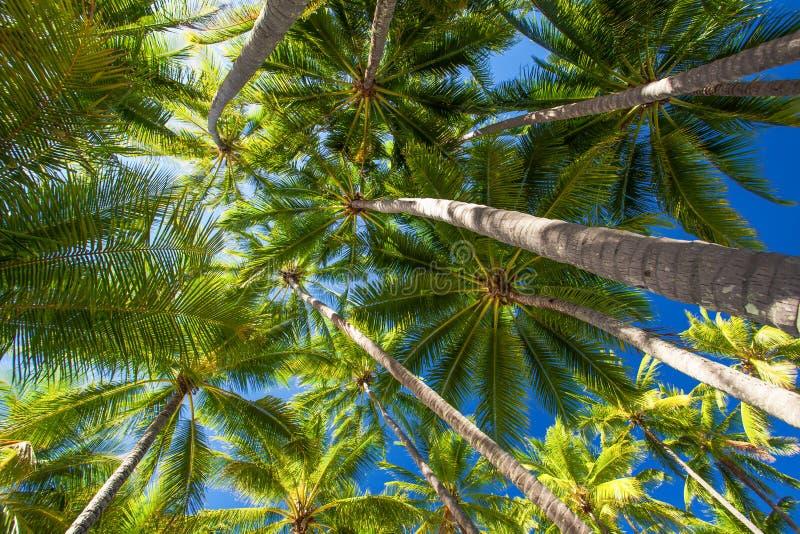 Foto do baixo ângulo das palmeiras na praia tropical fotografia de stock