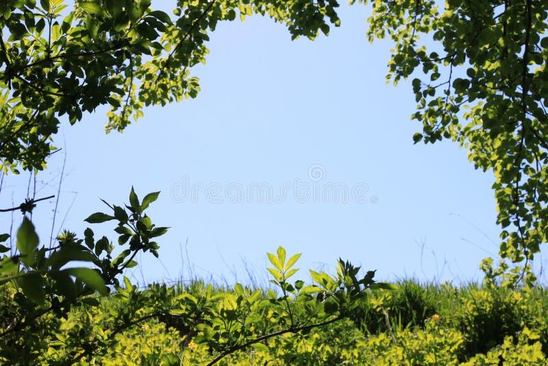 Foto do céu azul claro no quadro verde natural da grama, das folhas e dos ramos dos arbustos e das árvores com espaço para o text foto de stock