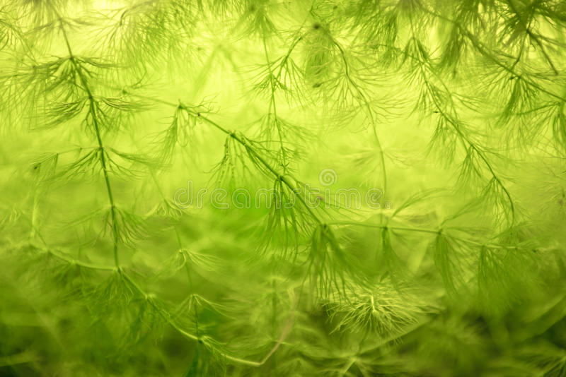 Foto do close up da planta verde fotografia de stock royalty free