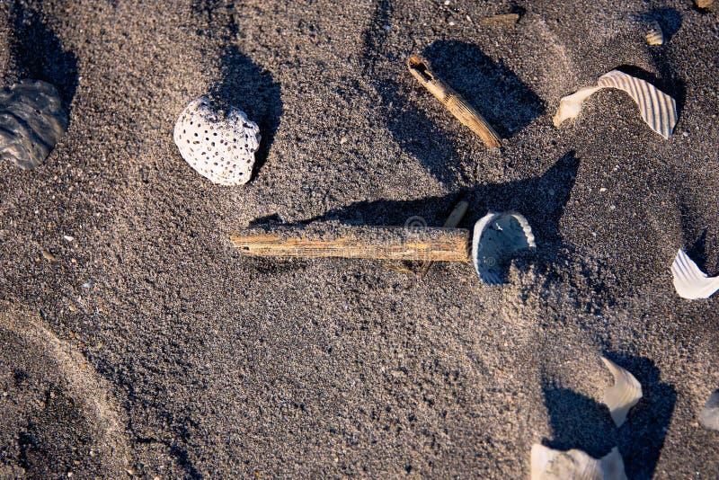 A foto do close up de shell sortidos e de madeira lançada à costa remenda na areia escura de uma praia de Florida imagens de stock